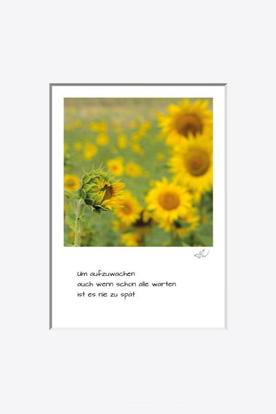 haiku_1807-5915