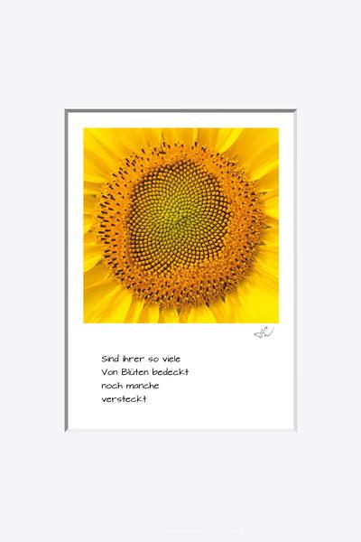 haiku_1807-5935