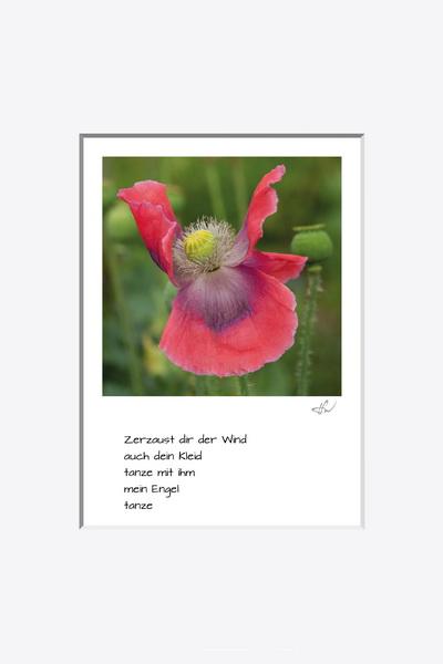 haiku_1807-6203