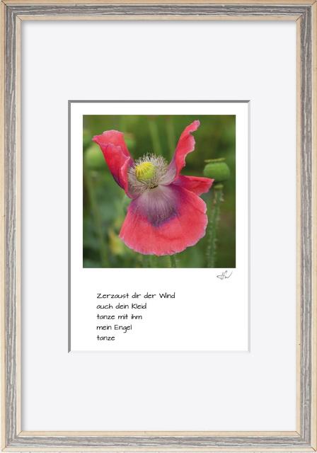 haiku_1807-6203_mR